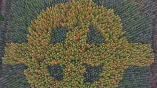 Drone Footage Captures Mysterious Celtic Cross in Irish Forest