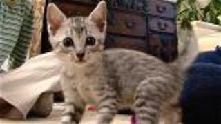 How To Raise A Kitten - Video