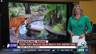 Tiger that killed Palm Beach Zoo keeper dies Thursday