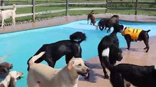 Swimming Pool Plays Host to World's Happiest Scene - Video