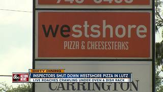 Dirty Dining: Westshore Pizza shut down for live roaches in kitchen & almost 40 violations - Video