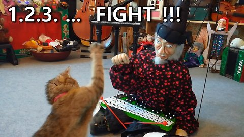 The Cat Is Fighting A Theater Marionette