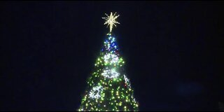 Magical Forest tree lighting ceremony