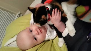 Why Kitties Make The Best Babysitter - Video