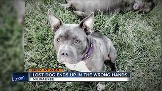 Milwaukee neighbors accidentally give away lost dog to wrong owners - Video