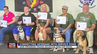 Connecting veterans with service dogs - Video