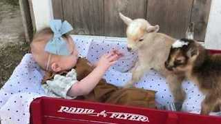 Adorable Infant Bonds with Baby Goats - Video