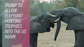 US outraged over Elephant hunt imports - Video