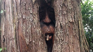 Guy finds a Bear and Two Old Men hiding within a Giant Cedar Tree - Video
