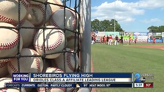 Rodriguez, Shorebirds flying high