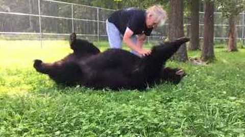 Woman Brushes Delighted Bear at Wildlife Center