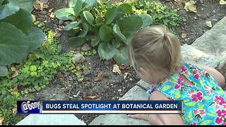 18th annual Bug Day at the Idaho Botanical Garden - Video
