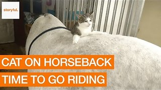 Adventurous Cat Prepares for Horse Riding - Video