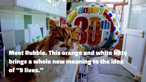 Cat Believed To Be Oldest in World Celebrates 137th Birthday in Human Years