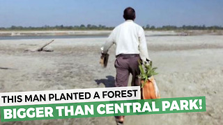 Man Plants A Forest Bigger Than Central Park - Video