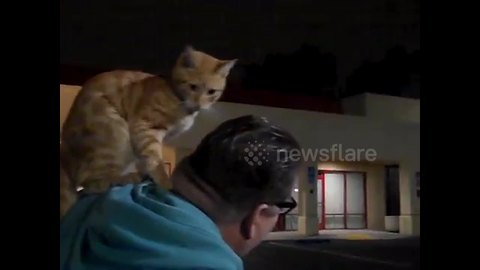 Stray cat sits on man's shoulder like a parrot