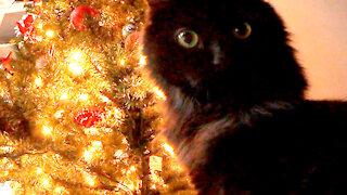 Hidden camera shows cats attacking Christmas tree