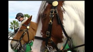 PBSo deputies and horses spread holiday message