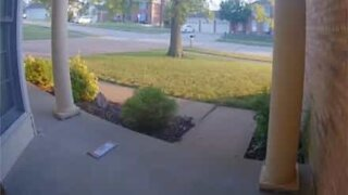 Security camera captures ants stealing mail