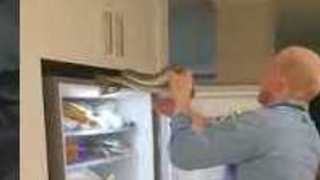 Family Finds Six-Foot Snake Curled Up on Top of Fridge - Video