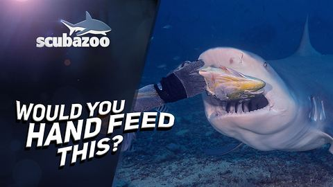 Handfeeding a bull shark is just as nuts as it sounds