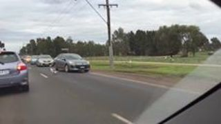 Super-Chilled Geese Stop Traffic in Melbourne Suburbs - Video
