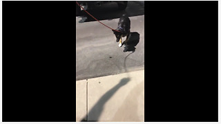 Excited dog plays with large flying bug