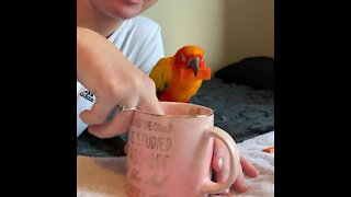 """Parrot dunks his """"cookie"""" into owner's almond milk"""