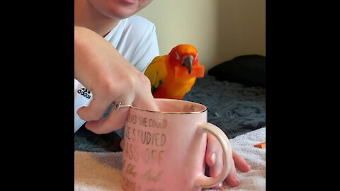 "Parrot dunks his ""cookie"" into owner's almond milk"