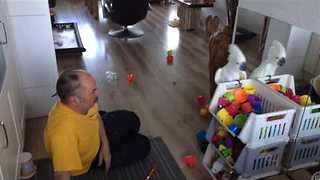 Sporty Cockatoo Plays Catch With Her Dad - Video