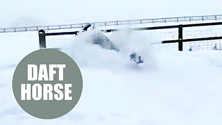 Hilarious video of horse face-planting in huge pile of snow goes viral - Video