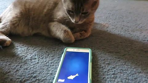 Cats play with their favorite iPhone app