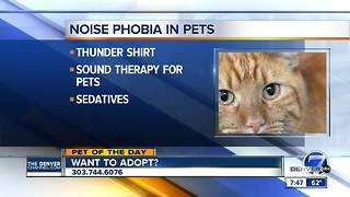 Pet of the day for August 19th - Video