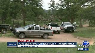 Wildlife officials searching for bear that attacked family camping in Larimer County - Video
