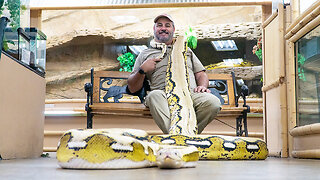'Snake God' Wrestles 20ft Pythons | BEAST BUDDIES