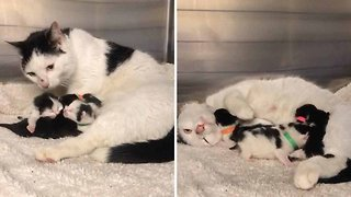 Please Mind The Cat! Litter Of Kittens Rescued From Under Tube Station Escalator
