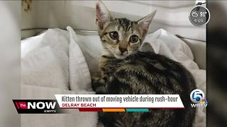 Good Samaritan rescues kitten thrown from car - Video