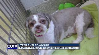 Nearly two dozen dogs, birds & ponies rescued from metro Detroit home - Video