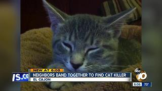 Neighbors band together to find cat killer