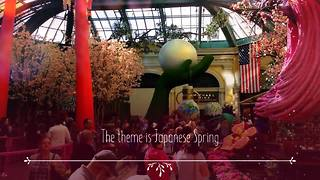 Japanese Spring at Bellagio - Video
