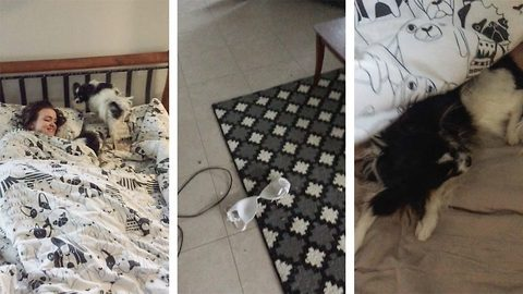 Bra stealing dogs try to hide guilt by burrowing under owner's duvet
