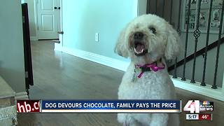 Family warns others after dog's chocolate scare