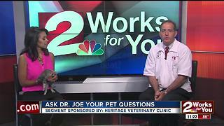 Veterinarian Dr. Joe visits midday to answer pet health questions