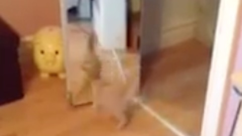 SO CUTE. Cat plays with his reflection in the mirror