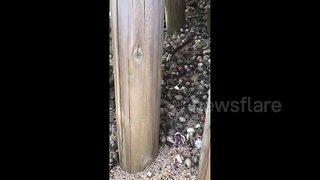 Crustacean Nation! A horde of hermit crabs invade Japanese beach - Video