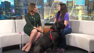 Pet of the Week: Snarfblatt - Video