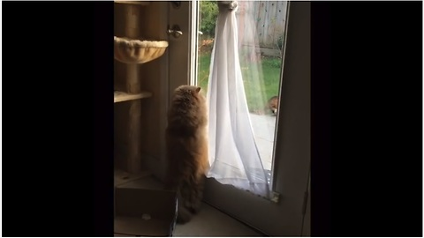 Persistent cat desperately tries to open back door