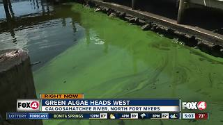Green algae washes up on North Fort Myers marina - Video