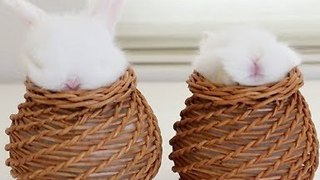 Baby Bunnies Meditate Inside Personalized Baskets - Video
