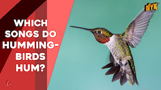 What You Should Know About Hummingbirds